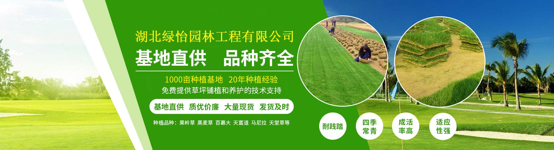武汉草坪价格