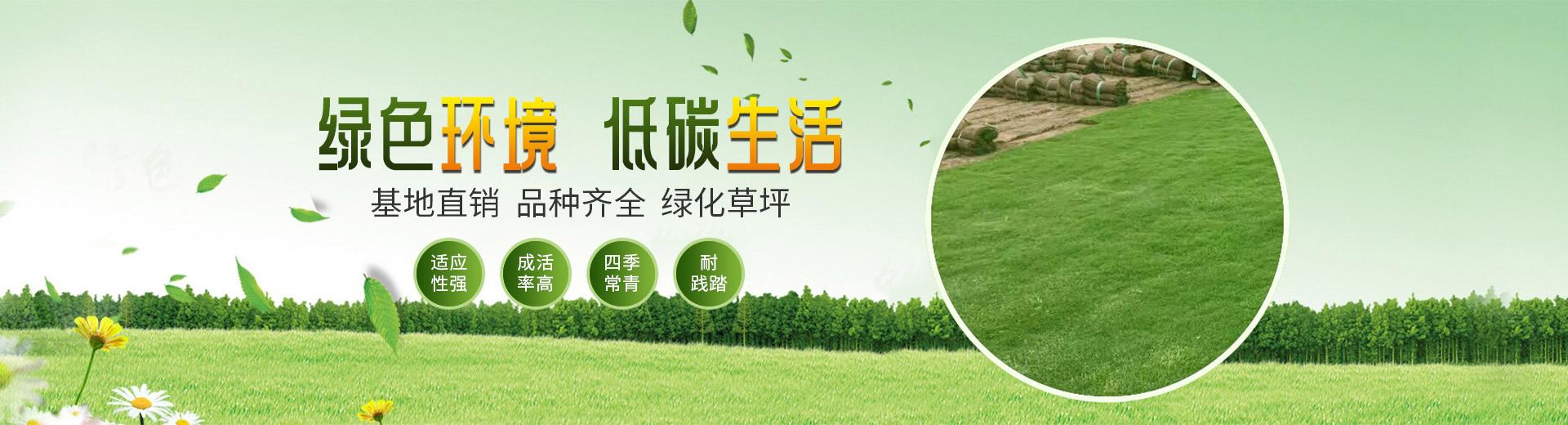 武汉草皮基地